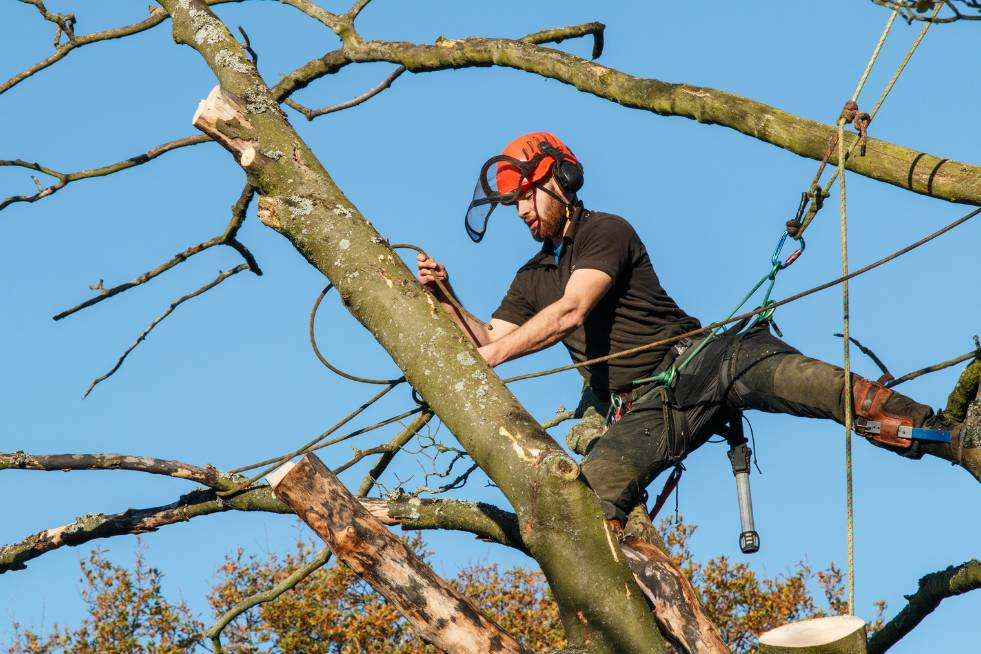 Tree Service Independence MO - Arborist in tree cutting the branches