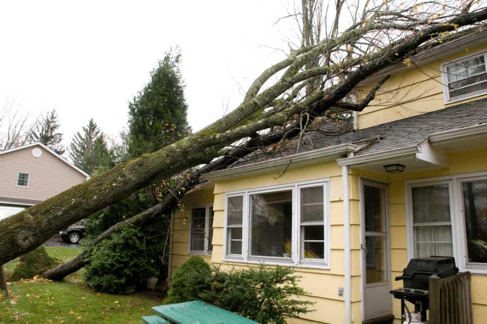 Tree Service Independence MO - Emergency Tree Service