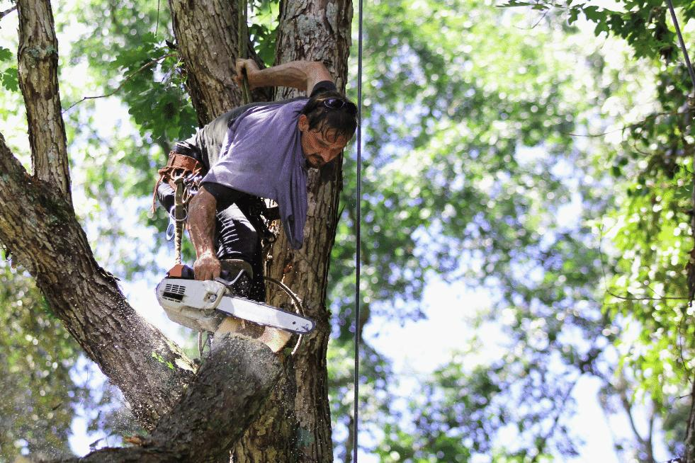 Tree Service Independence MO - Services