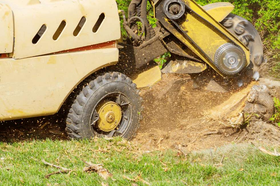 Tree Service Independence MO - Stump grinding