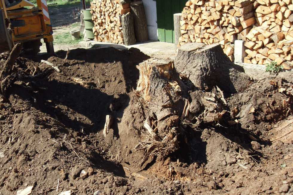 Tree Service Independence MO - Stump removal