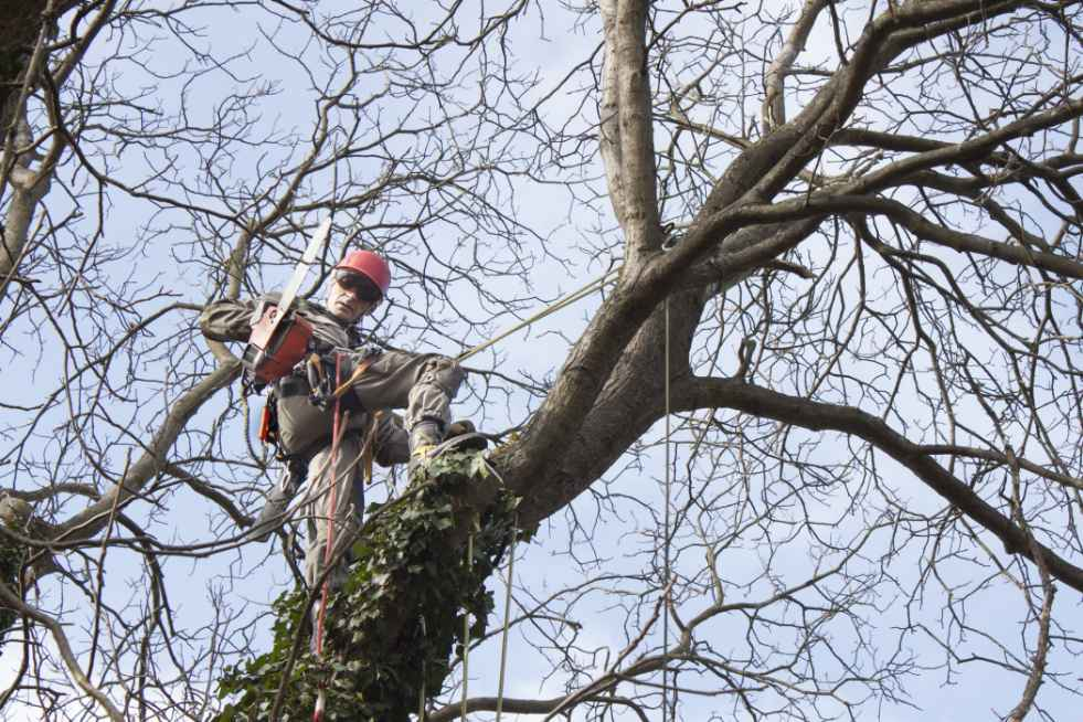 Tree Service Independence MO - Tree removal