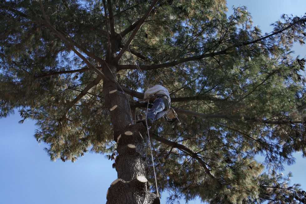 Tree Service Independence MO - Tree trimming and pruning